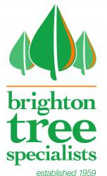 brighton tree specialists