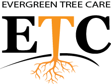 Evergreen Tree Care