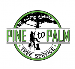 Pine to Palm Tree Service
