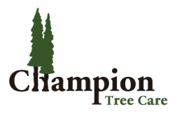Champion Tree Care